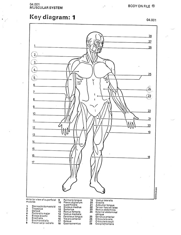 Anatomy work home ccuart Images